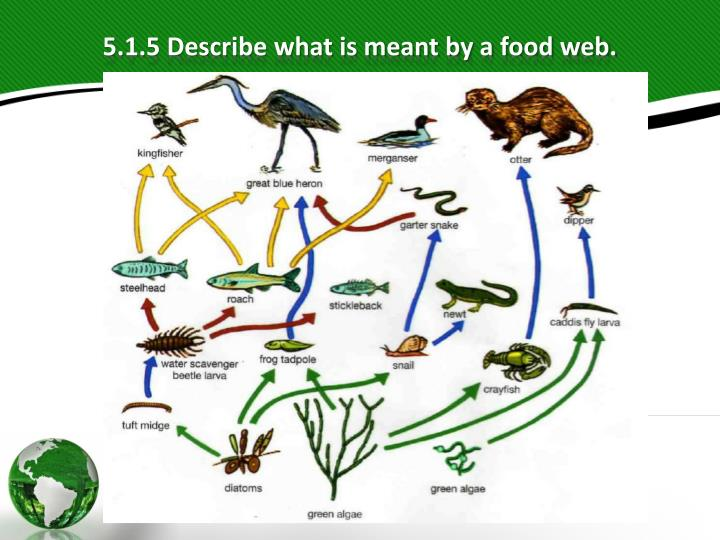 what is meant by organism