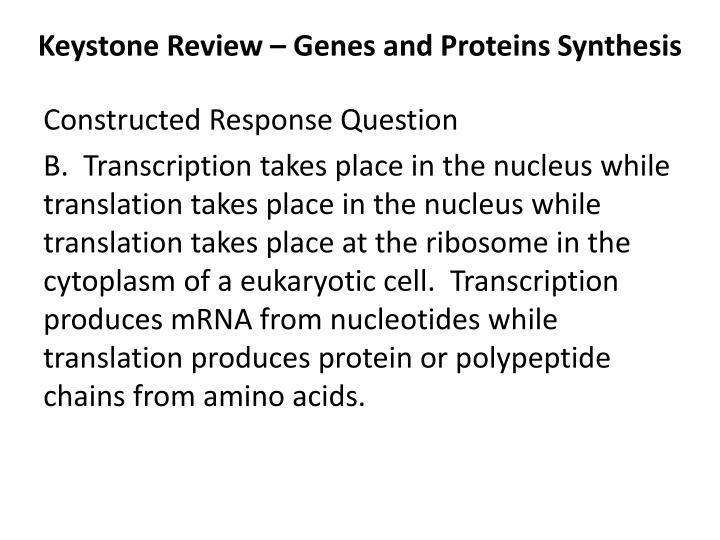 Keystone review genes and proteins synthesis2