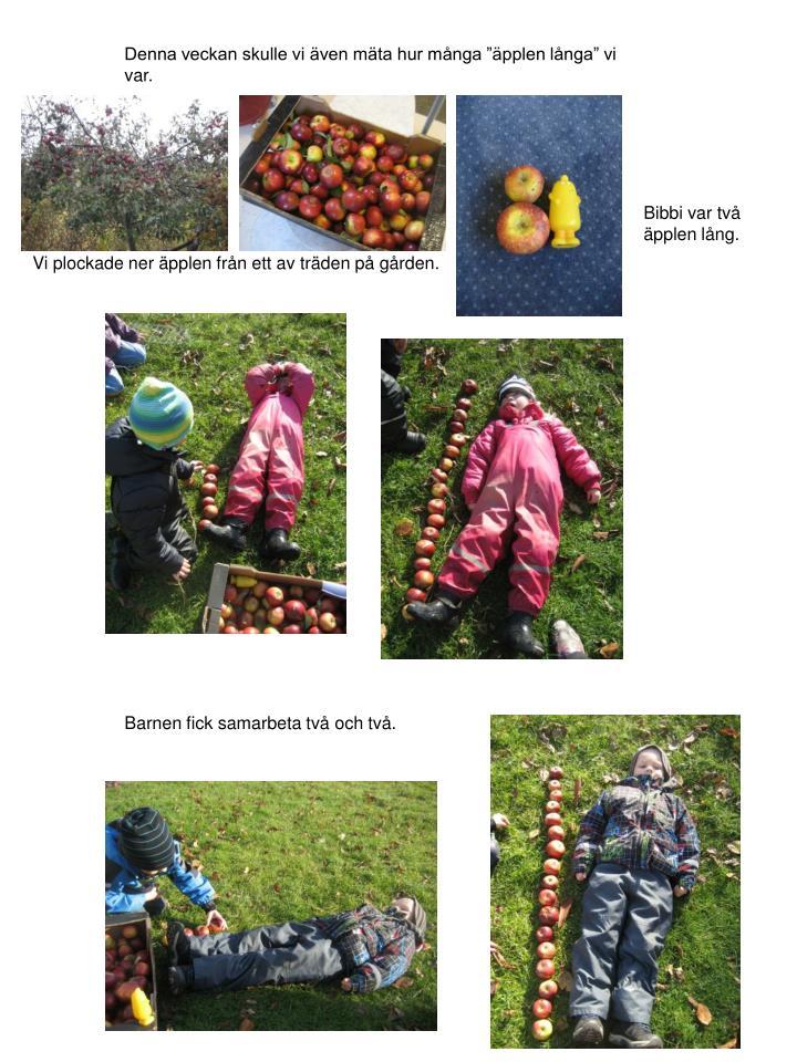 """Denna veckan skulle vi även mäta hur många """"äpplen långa"""" vi var."""