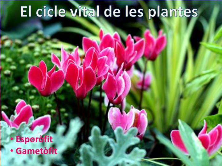 El cicle vital de les plantes