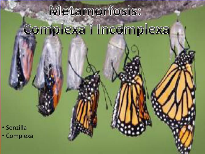 Metamorfosis: