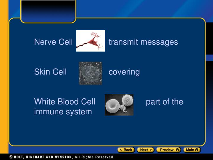 Nerve Celltransmit messages