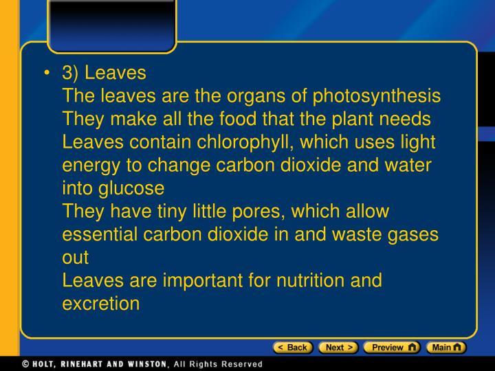 3) Leaves
