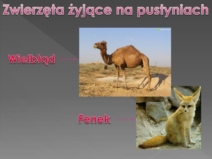 Zwierzęta żyjące na pustyniach