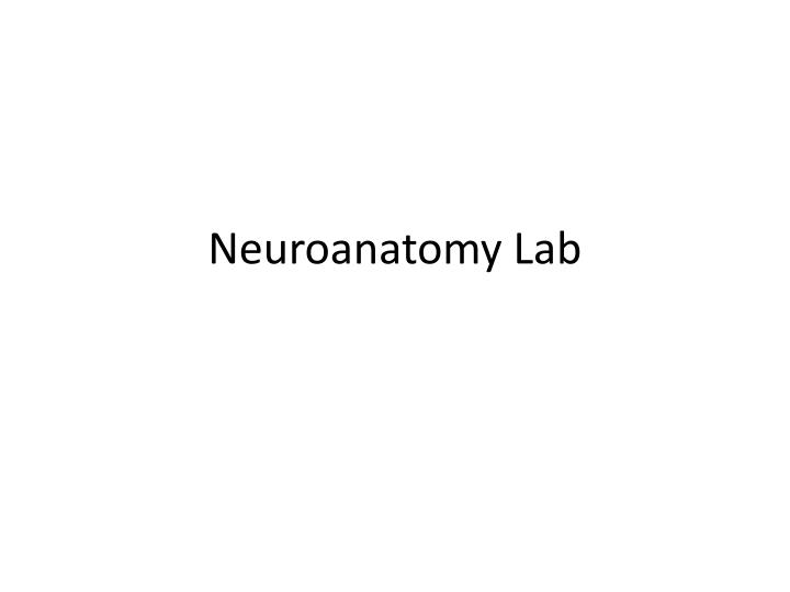 Neuroanatomy lab