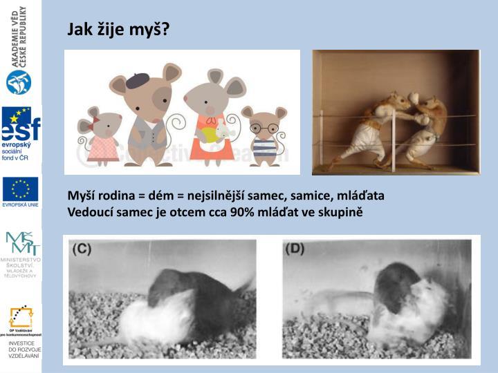 Jak žije myš?