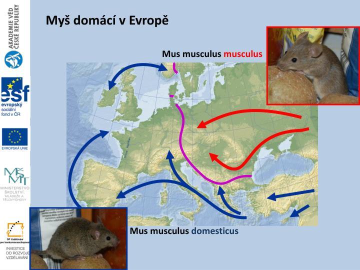 Myš domácí v Evropě