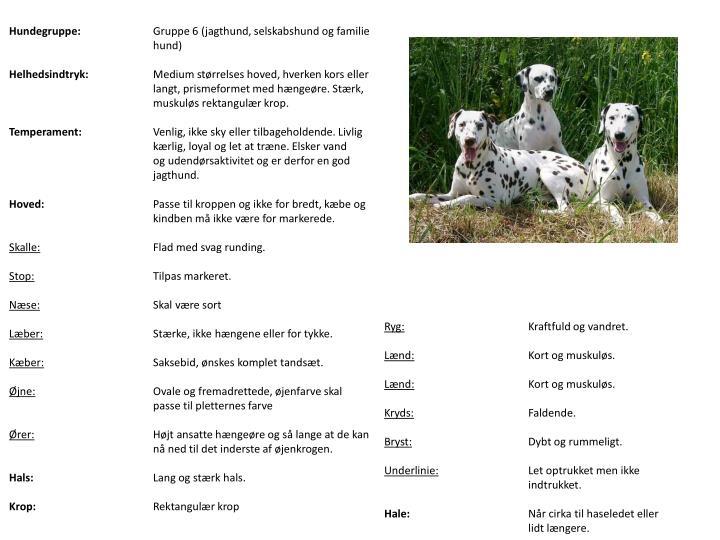 Hundegruppe: