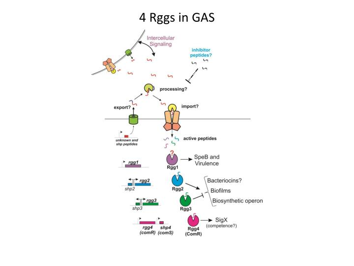 4 Rggs in GAS
