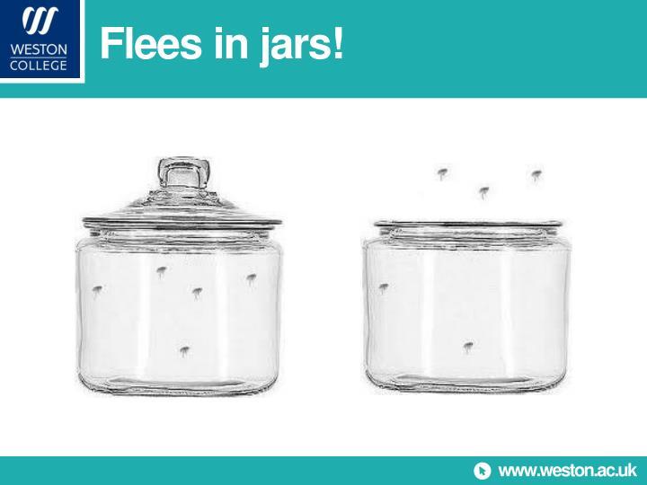 Flees in jars!