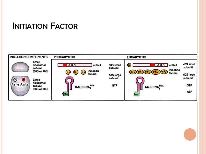 Initiation Factor