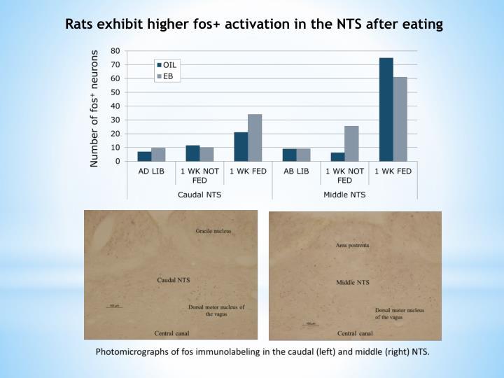 Rats exhibit higher