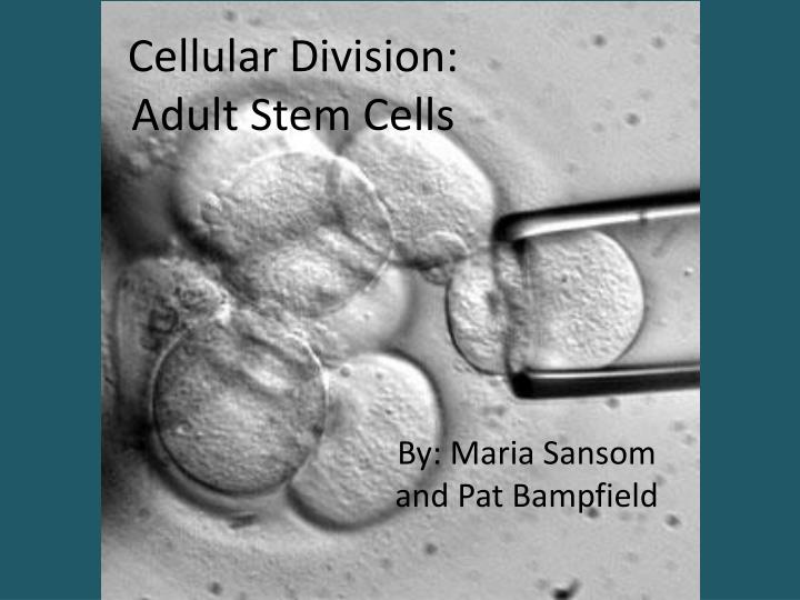 should stem cell transplants be done essay