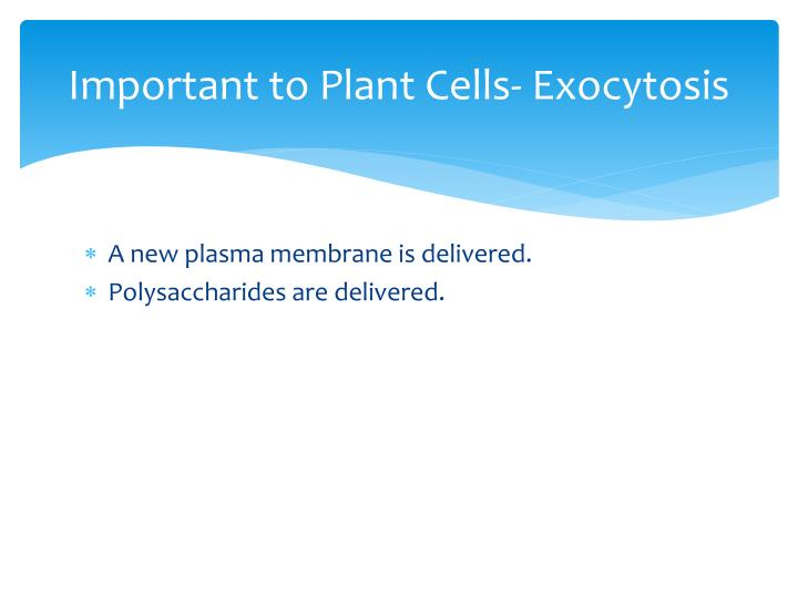 Important to Plant Cells- Exocytosis