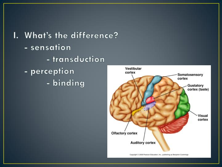 I what s the difference sensation transduction perception binding