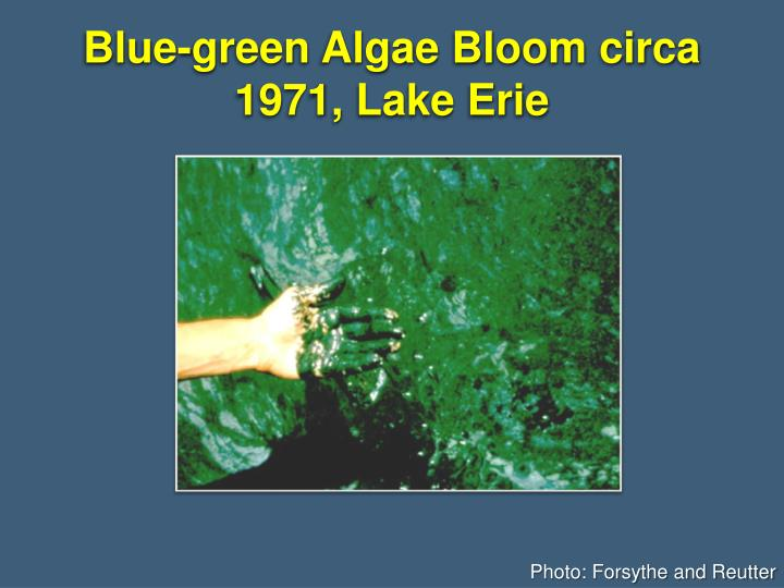 Blue-green Algae Bloom circa