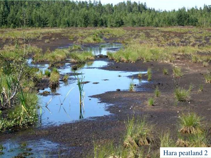 Hara peatland 2