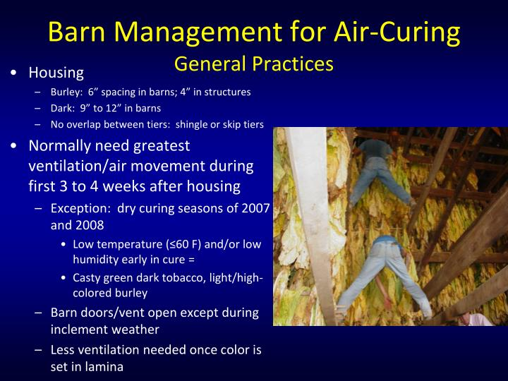 Barn Management for Air-Curing