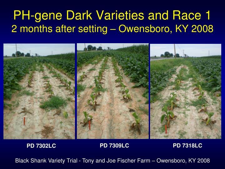 PH-gene Dark Varieties and Race 1
