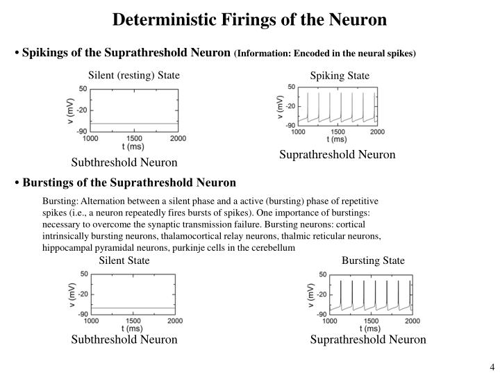 Deterministic Firings of the Neuron