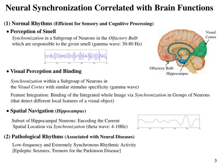 Neural Synchronization Correlated with Brain Functions