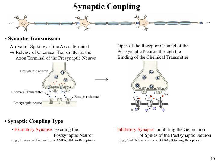 Synaptic Coupling
