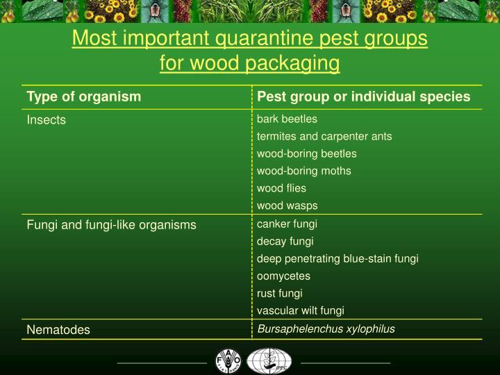 Most important quarantine pest groups