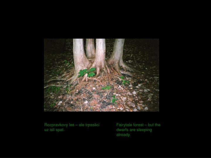 Rozpravkovy les – ale trpaslici uz isli spat.