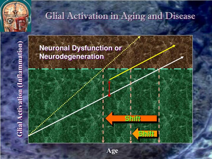 Glial Activation in Aging and Disease
