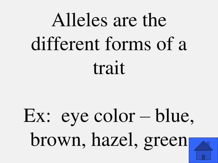 Alleles are the different forms of a trait