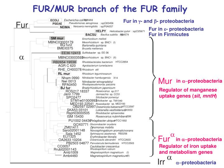 Fur in