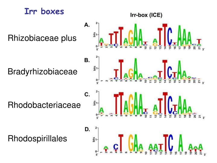 Irr boxes