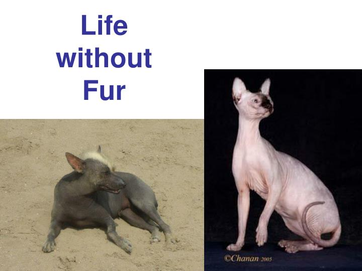Life without fur