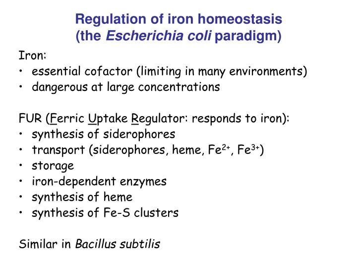 Regulation of iron homeostasis