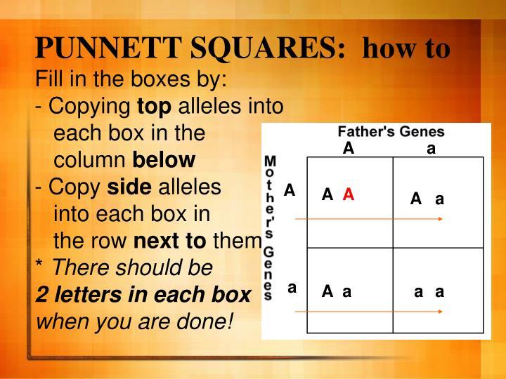 PUNNETT SQUARES:  how to