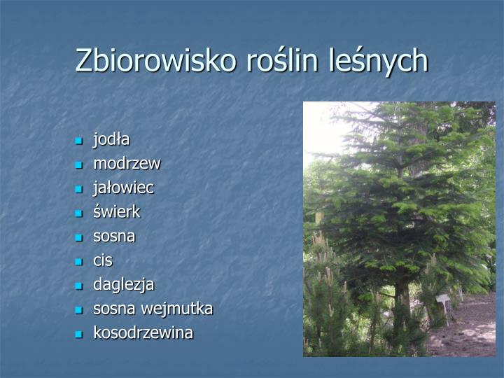 Zbiorowisko roślin leśnych