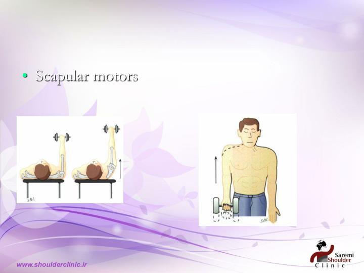 Scapular motors