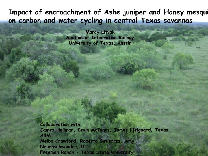 Impact of encroachment of Ashe juniper and Honey mesquite