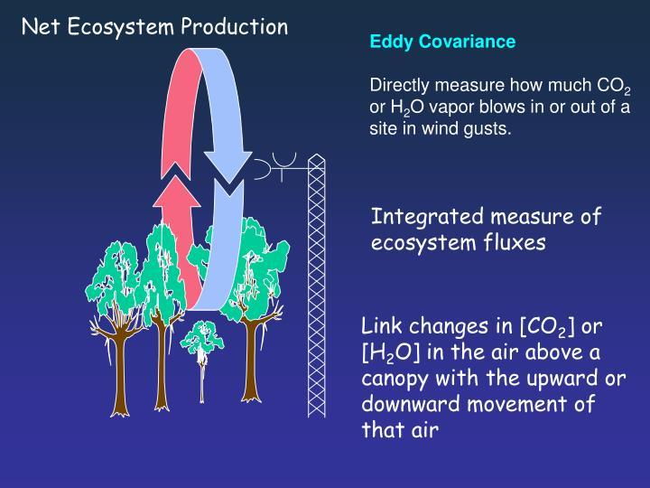 Net Ecosystem Production