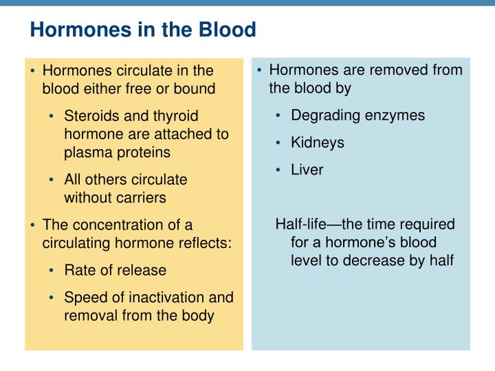 Hormones in the Blood