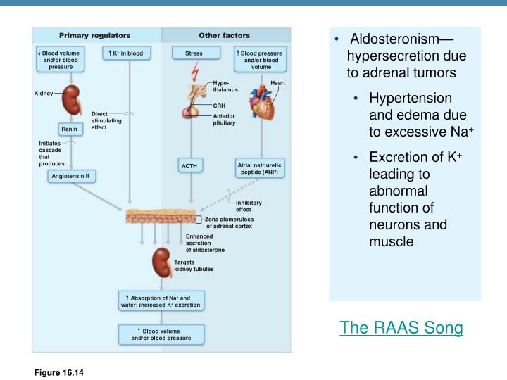 Aldosteronism—hypersecretion due to adrenal tumors