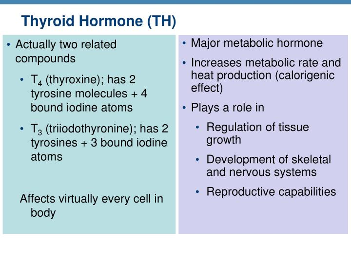 Thyroid Hormone (TH)