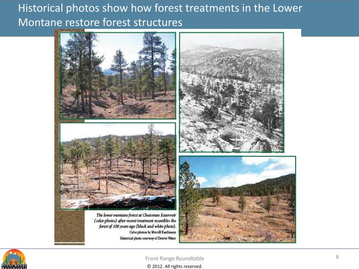Historical photos show how forest treatments in the Lower Montane restore forest structures