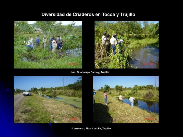 Diversidad de Criaderos en Tocoa y Trujillo