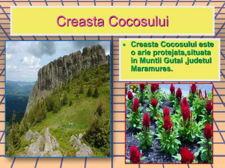 Creasta Cocosului