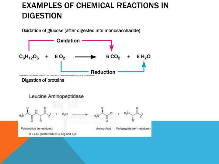 Examples of chemical reactions in digestion