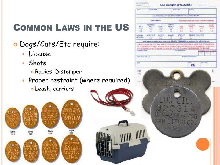 Common Laws in the US