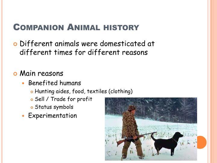 Companion Animal history