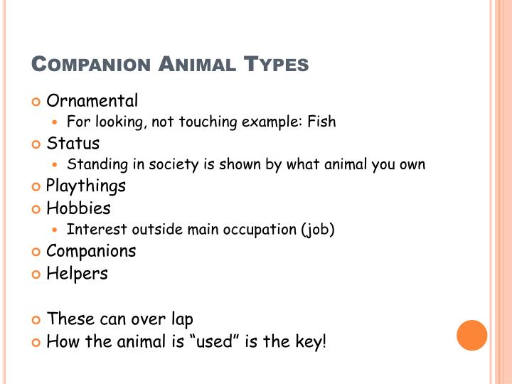 Companion Animal Types