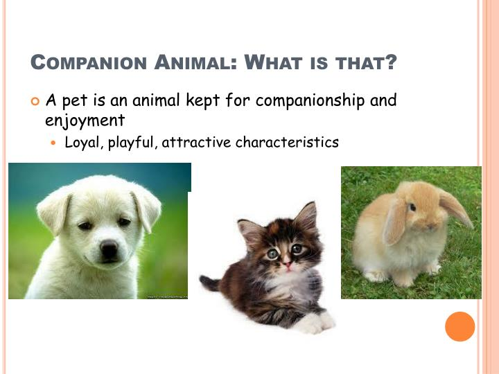 Companion Animal: What is that?